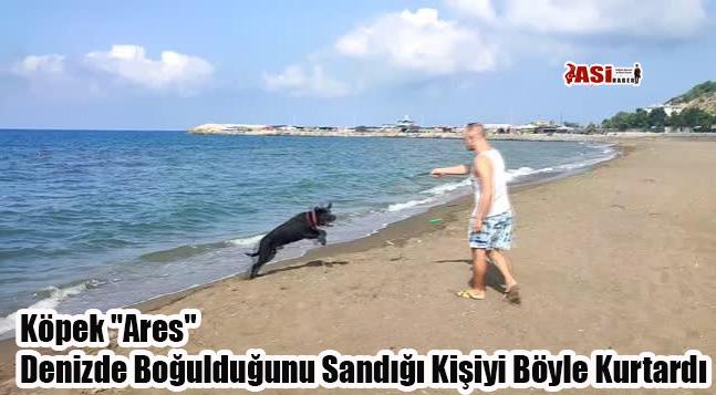 """Köpek """"Ares"""" Denizde Boğulduğunu Sandığı Kişiyi Böyle Kurtardı"""