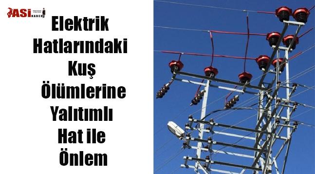 Elektrik Hatlarındaki Kuş Ölümlerine Yalıtımlı Hat ile Önlem
